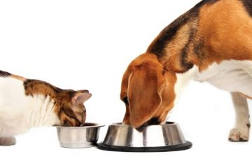 Μια Συμβολική Κίνηση από την Δρ. Αυγερινοπούλου για την Παγκόσμια Ημέρα για τα Ζώα