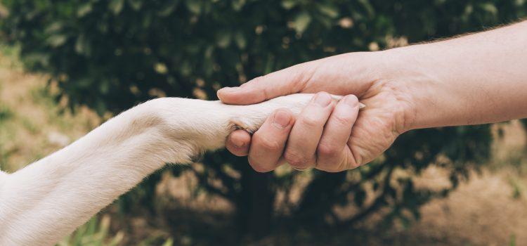 Αυγερινοπούλου για παράταση της ημερομηνίας υποβολής των αιτήσεων χρηματοδότησης για τη δημιουργία καταφυγίων αδέσποτων ζώων